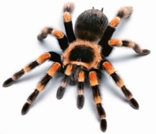 search-engine-spider.jpg