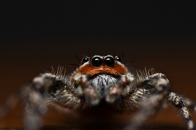 spider-close-up