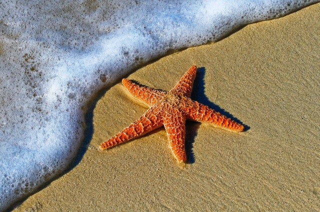 A starfish on the beach. An idyllic image.