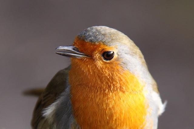 robin-tweets