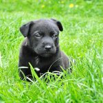7 Business & Blogging Clues a Puppy Can Teach You