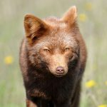 How Microsoft Made the Web Ugly & What to Do About it