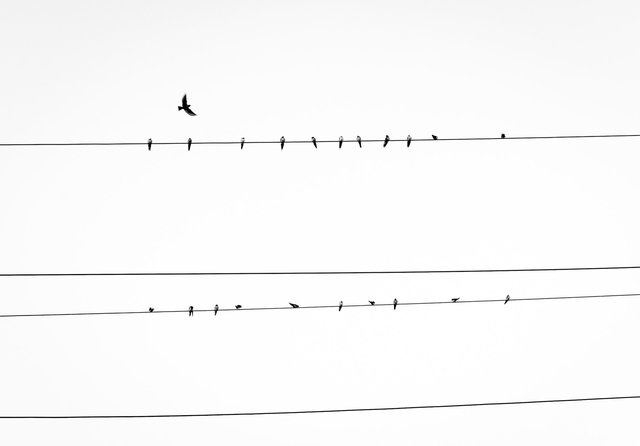 Birds sitting on power supply lines on a grey day. The sky looks almost white and it's empty.