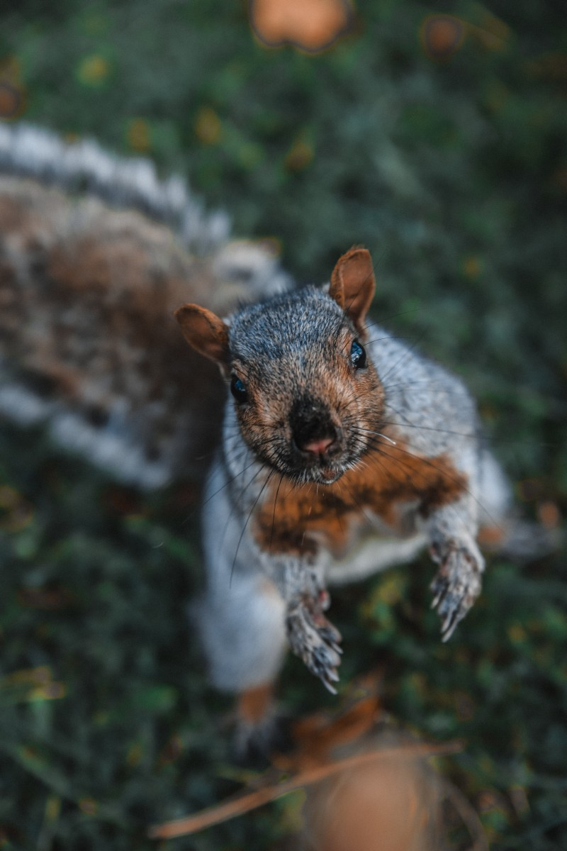 Squirrel asking for a nut. Should s/he use Quora or Yahoo Answers for the best results?