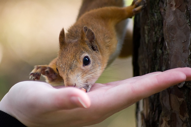 Someone is feeding a squirrel. You only see the open hand with the treat and the squirrel holding to the tree trunk with three legs and grabbing the nut with their mouth.