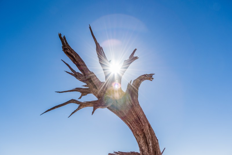A dead tree symbolizing the bad Google search results that only show ads above the fold.